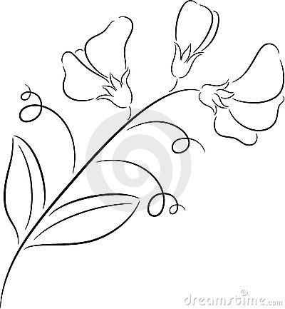 Daisy and sweet pea clipart black and white vector royalty free download how+to+draw+a+sweet+pea+flower | Sweet pea | Drawing Flower Ideas in ... vector royalty free download