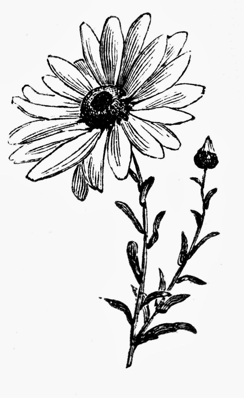 Daisy and sweet pea clipart black and white clip art transparent library High Daisy Flower | Pattern-illustration-art-architecture-templates ... clip art transparent library