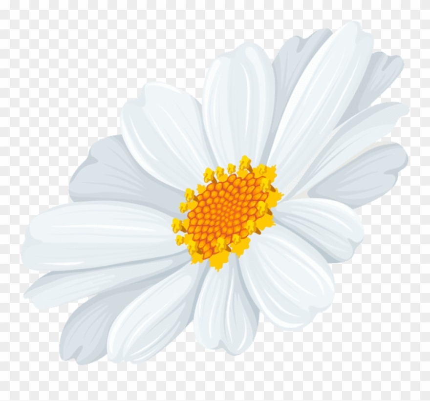 White daisy clipart transparent background png library library Free Png Download White Daisy Transparent Png Images - White ... png library library