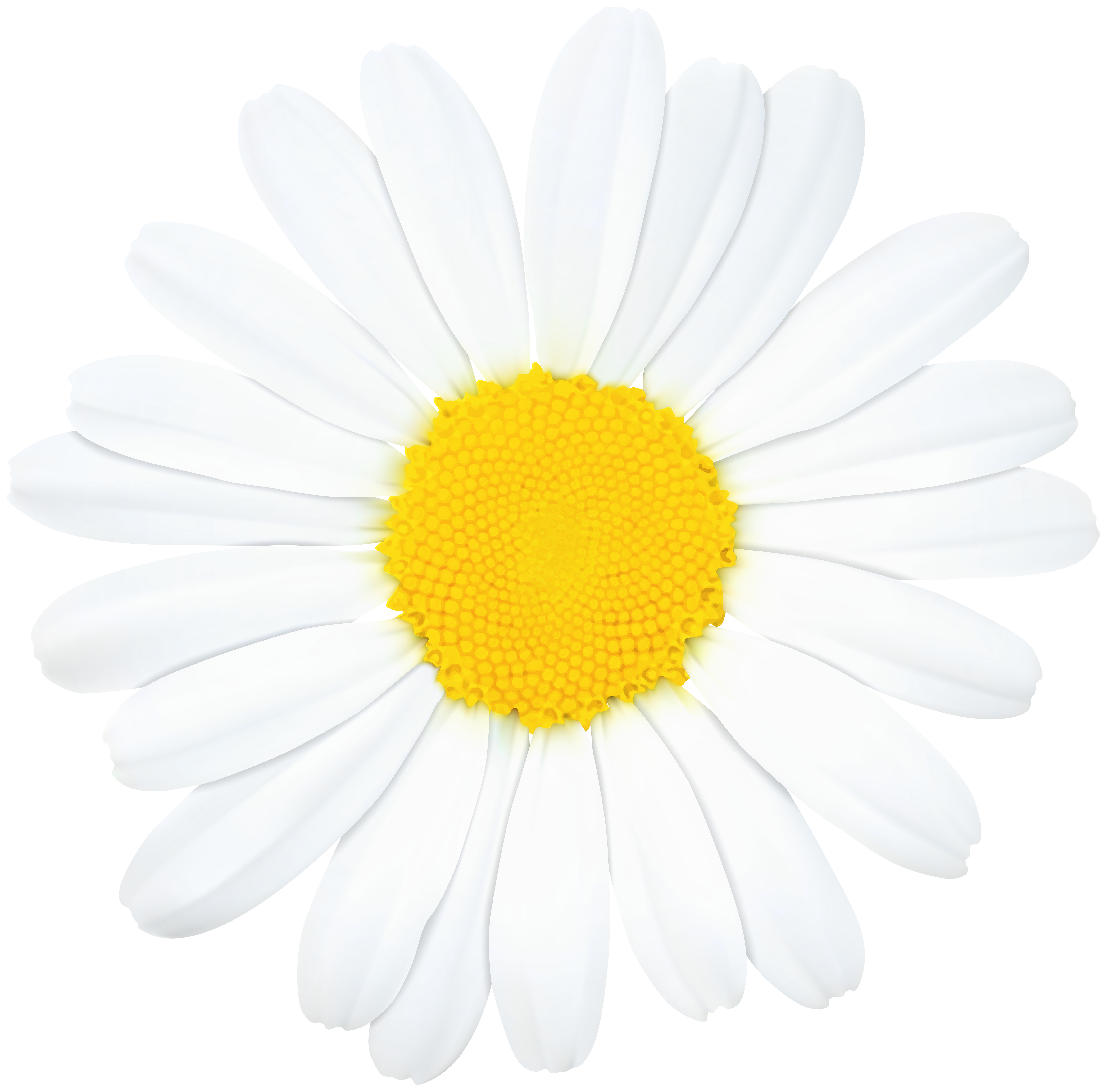 Daisy flower border clipart clip black and white download Daisy Flower PNG Clip Art Image | Gallery Yopriceville - High ... clip black and white download