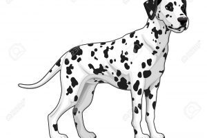 Dalmatian clipart black and white image free library Dalmatian clipart black and white 6 » Clipart Portal image free library