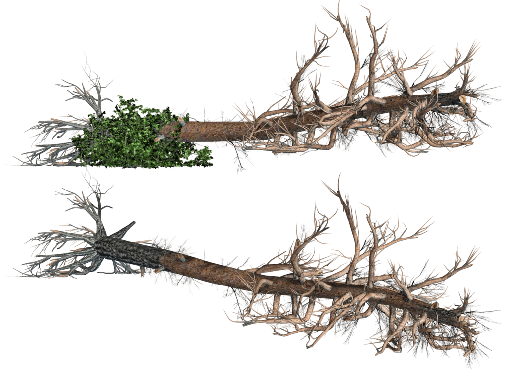 Damaged tree clipart clipart download 28+ Collection of Uprooted Tree Clipart   High quality, free ... clipart download