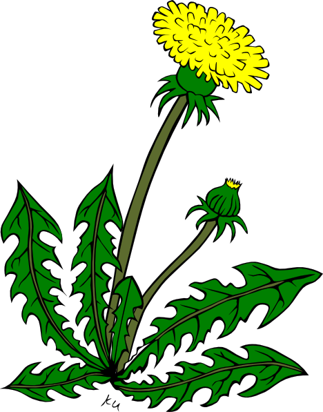 Dandelion cartoon character clipart graphic free Dandelion cartoon character clipart - ClipartFest graphic free