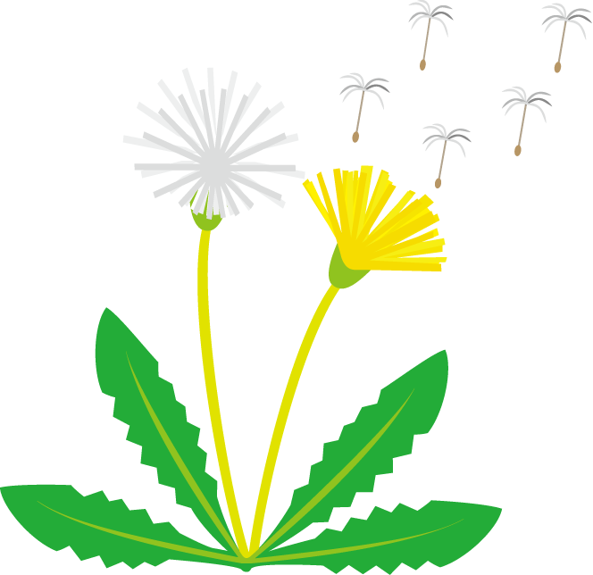 Dandelion clip art pictures graphic royalty free Dandelion Clipart - Clipart Kid graphic royalty free