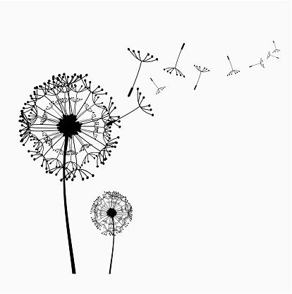 Dandelion clip art pictures jpg freeuse stock Dandelion vector clipart - ClipartFest jpg freeuse stock