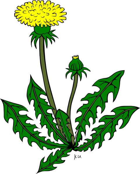 Dandelion clip art pictures svg royalty free library Dandelion Clipart - Clipart Kid svg royalty free library