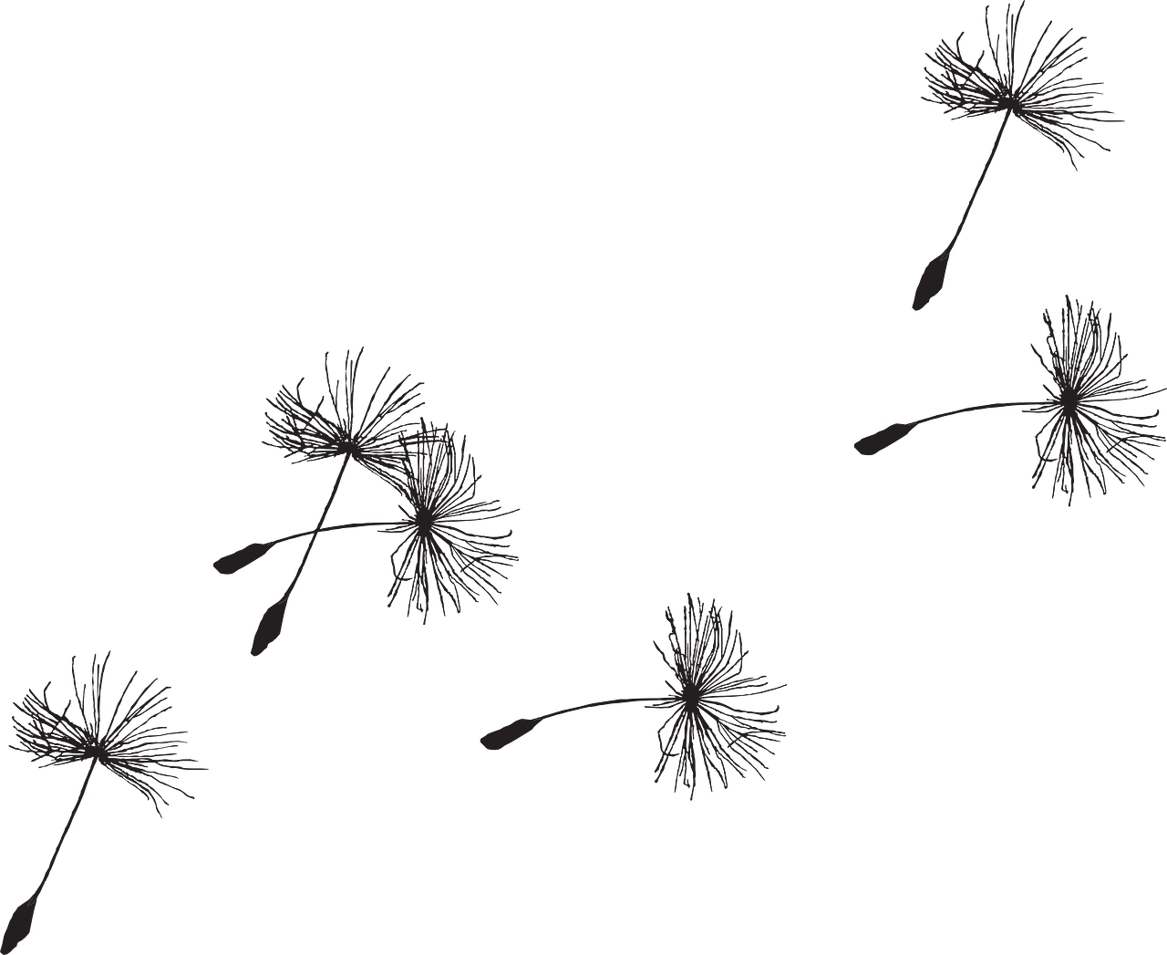 Sun dandilion birds clipart black and white library Free Image on Pixabay - Dandelion, Seed, Flora, Grass | Pinterest ... black and white library