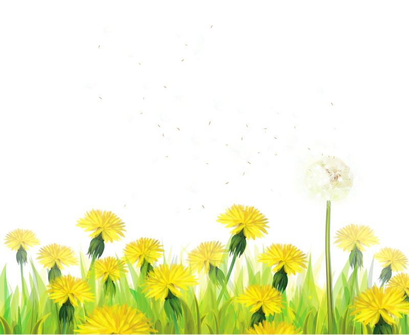 Dandelion flower clipart banner royalty free ForgetMeNot: Dandelions banner royalty free