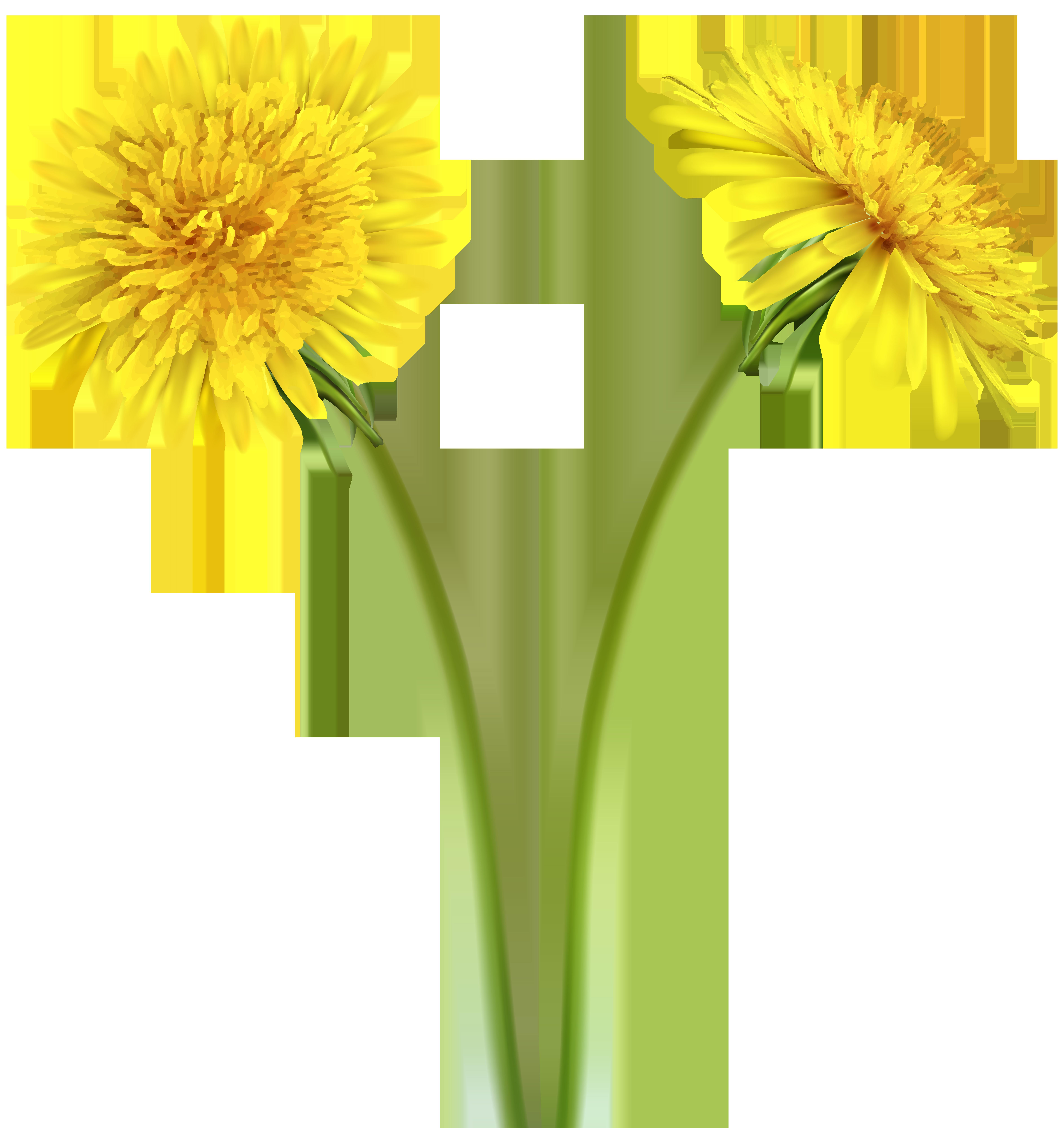 Dandelion flower clipart svg freeuse stock Dandelions Transparent Clip Art Image   Gallery Yopriceville - High ... svg freeuse stock