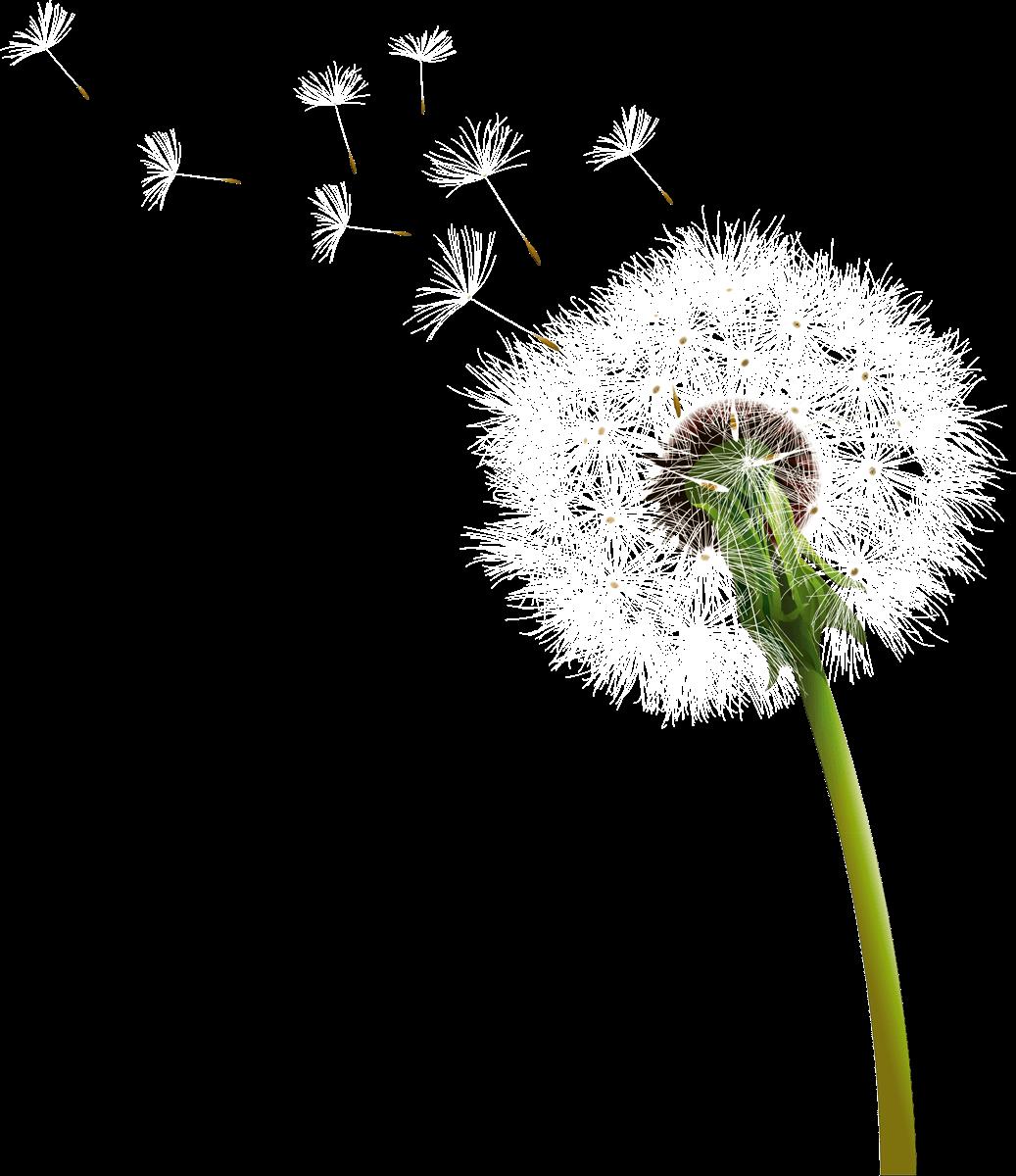 Dandelion flower clipart jpg free stock Dandelion Blowing transparent PNG - StickPNG jpg free stock