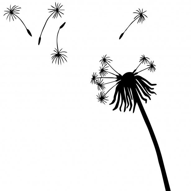 Simple dandelion clipart