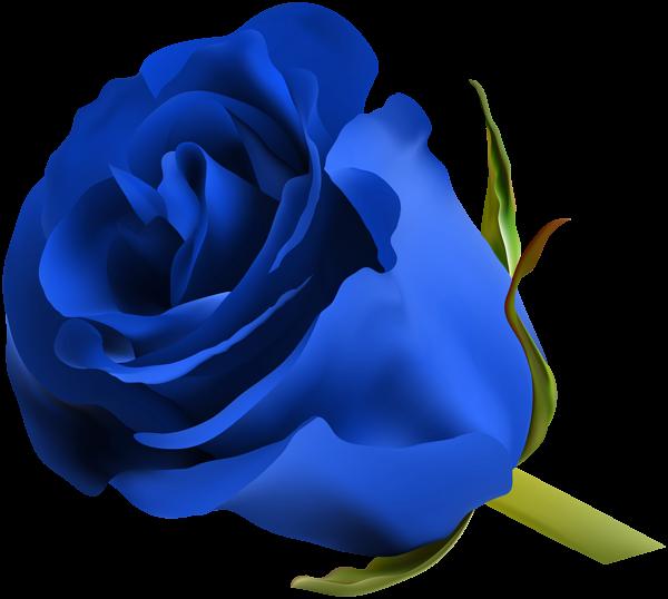 Blue Rose PNG Clip Art Image | ClipArt | Pinterest | Blue roses, Art ... vector free stock
