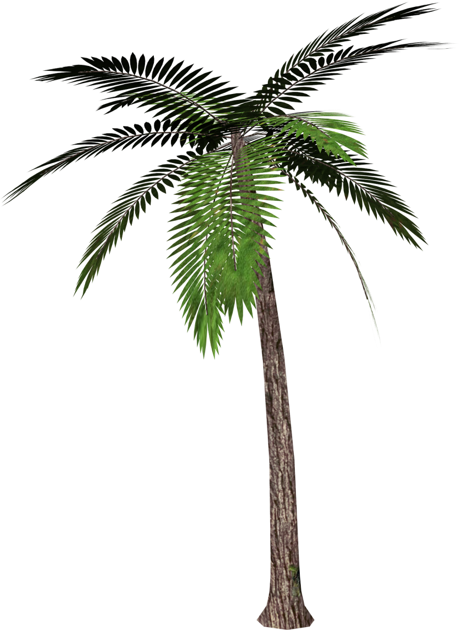 Palm tree clipart vector clipart free download Palm Tree PNG Clipart | Gallery Yopriceville - High-Quality Images ... clipart free download