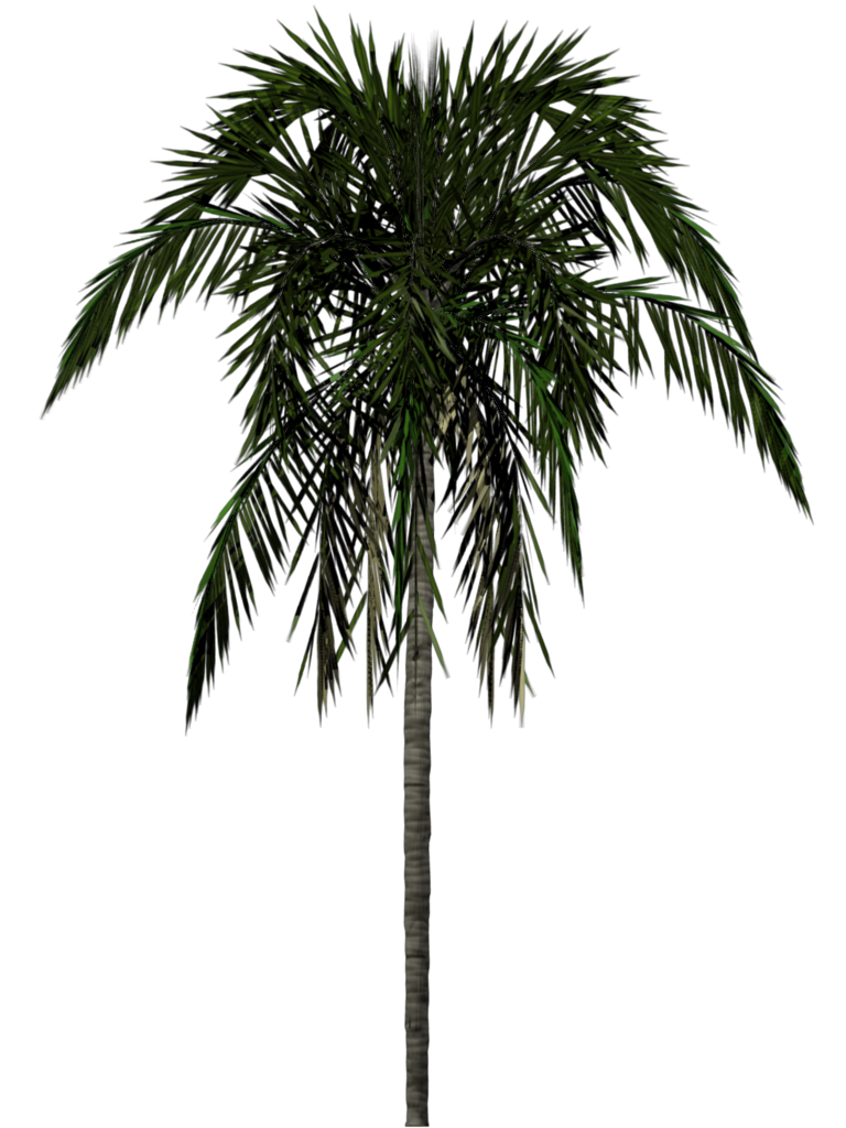 Date palm tree clipart clip freeuse library Palm Tree Png Image 2503 clip freeuse library