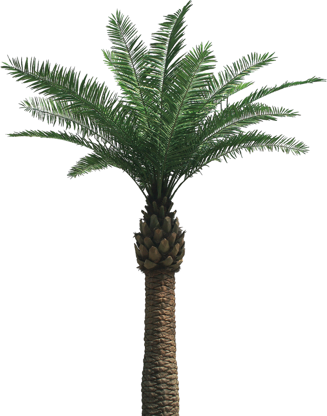 Date palm tree clipart image free download Artificial palm tree and cocotree LIKE REAL PALM TREE - absolutely ... image free download