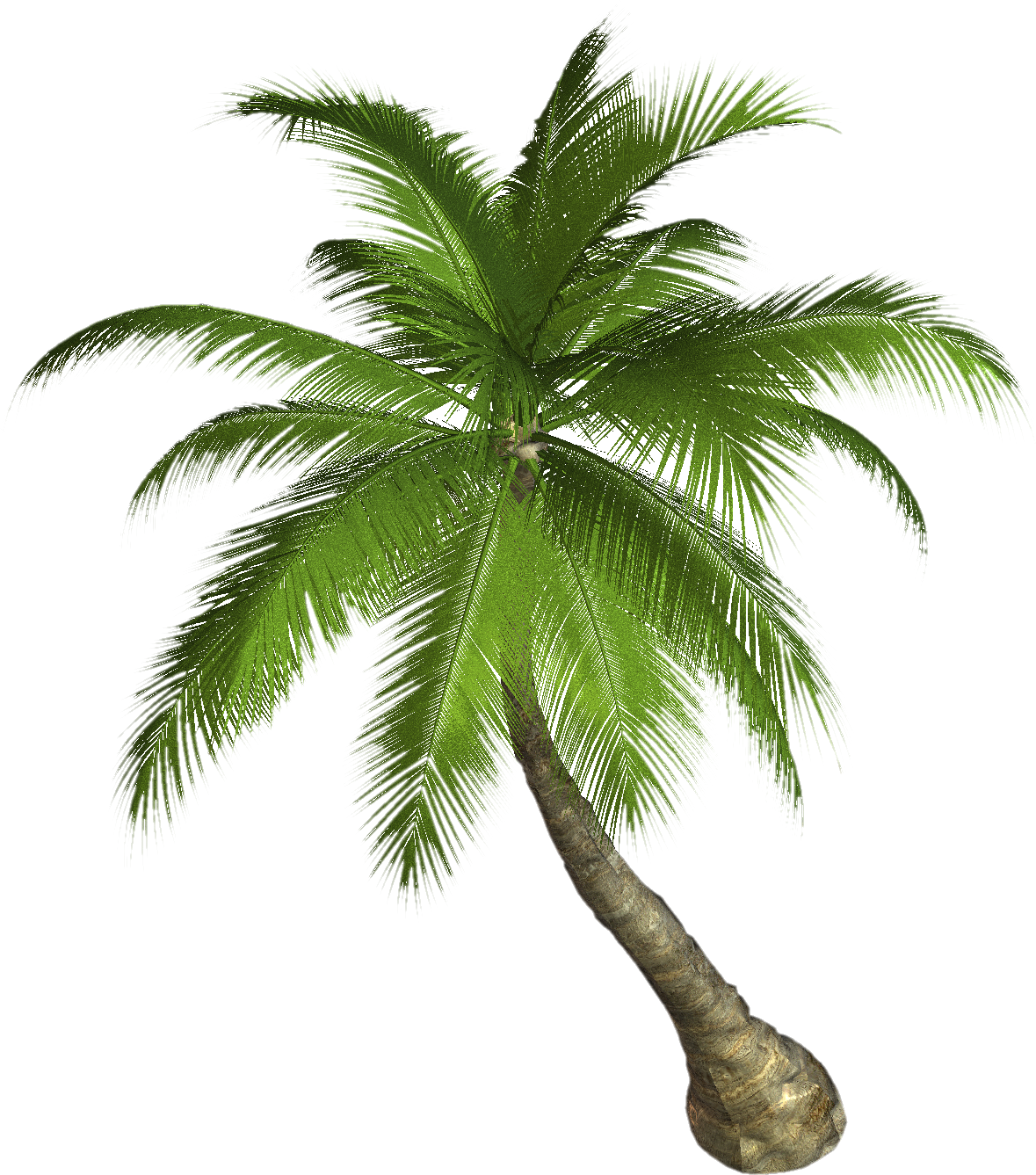 Date palm tree clipart graphic freeuse download Palm tree PNG images, download free pictures graphic freeuse download