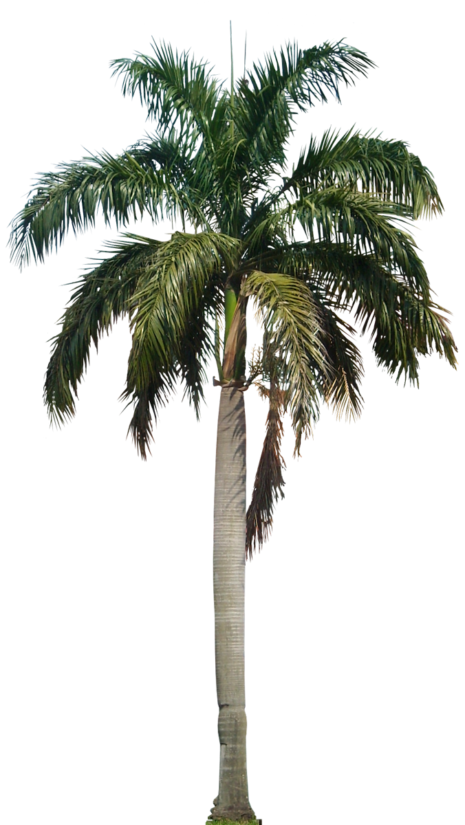 Date palm tree clipart graphic library Image result for palm trees png | ibiza backgrounds to try ... graphic library