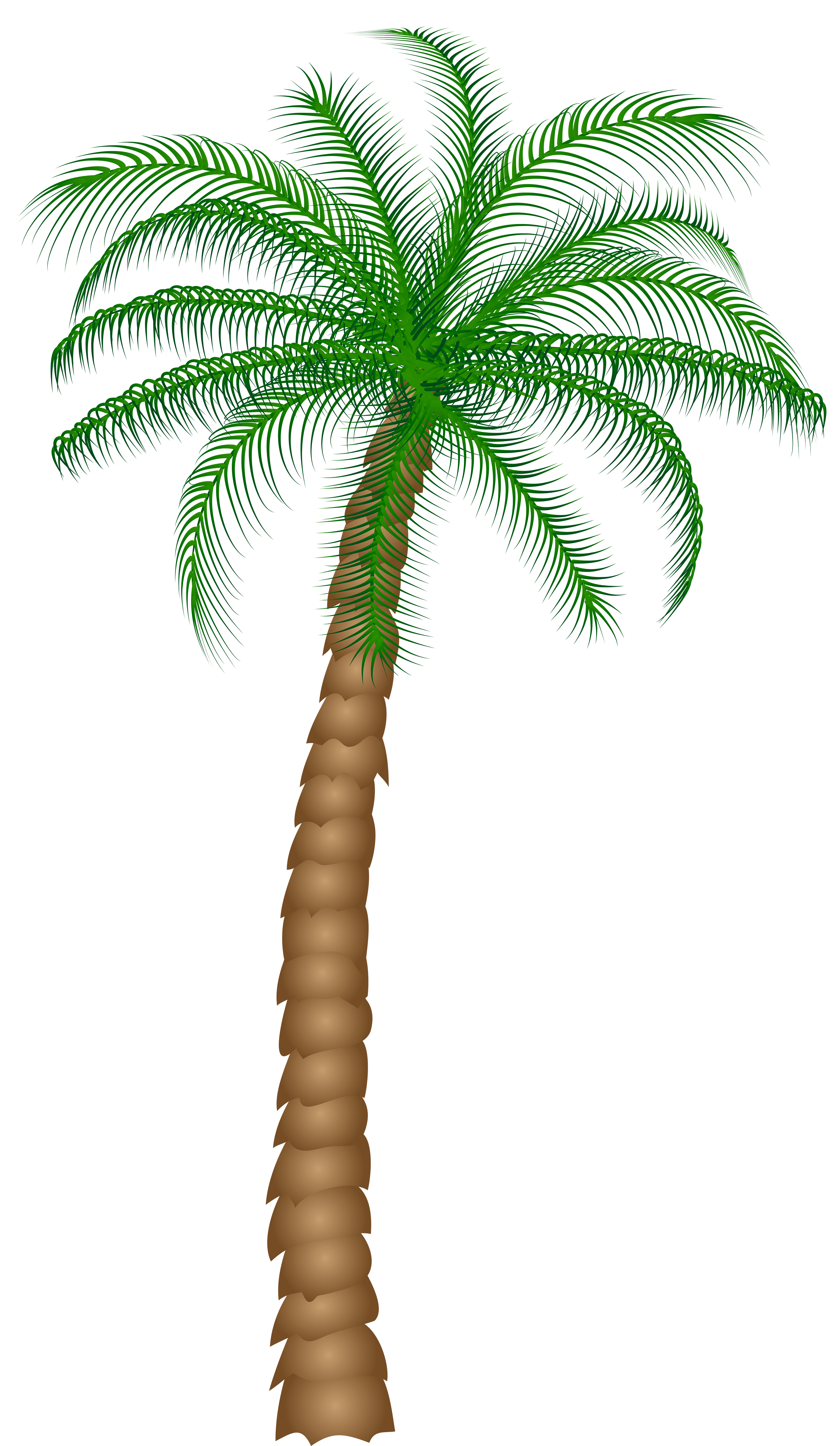 Palm tree christmas clipart black and white Palm Tree PNG Clipart | Gallery Yopriceville - High-Quality Images ... black and white