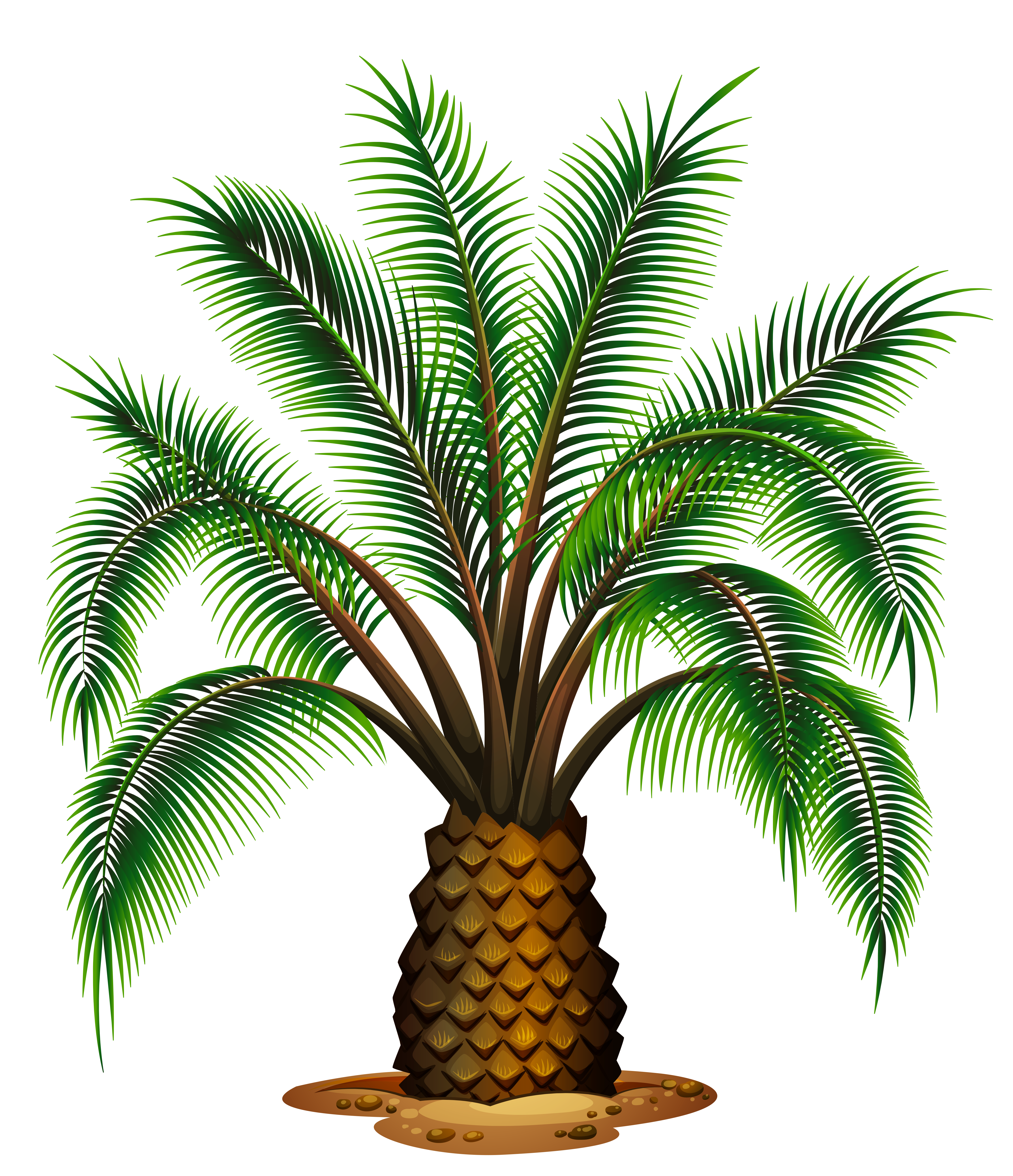 Palm tree clipart vector picture free Small Palm Tree Transparent Picture | Gallery Yopriceville - High ... picture free
