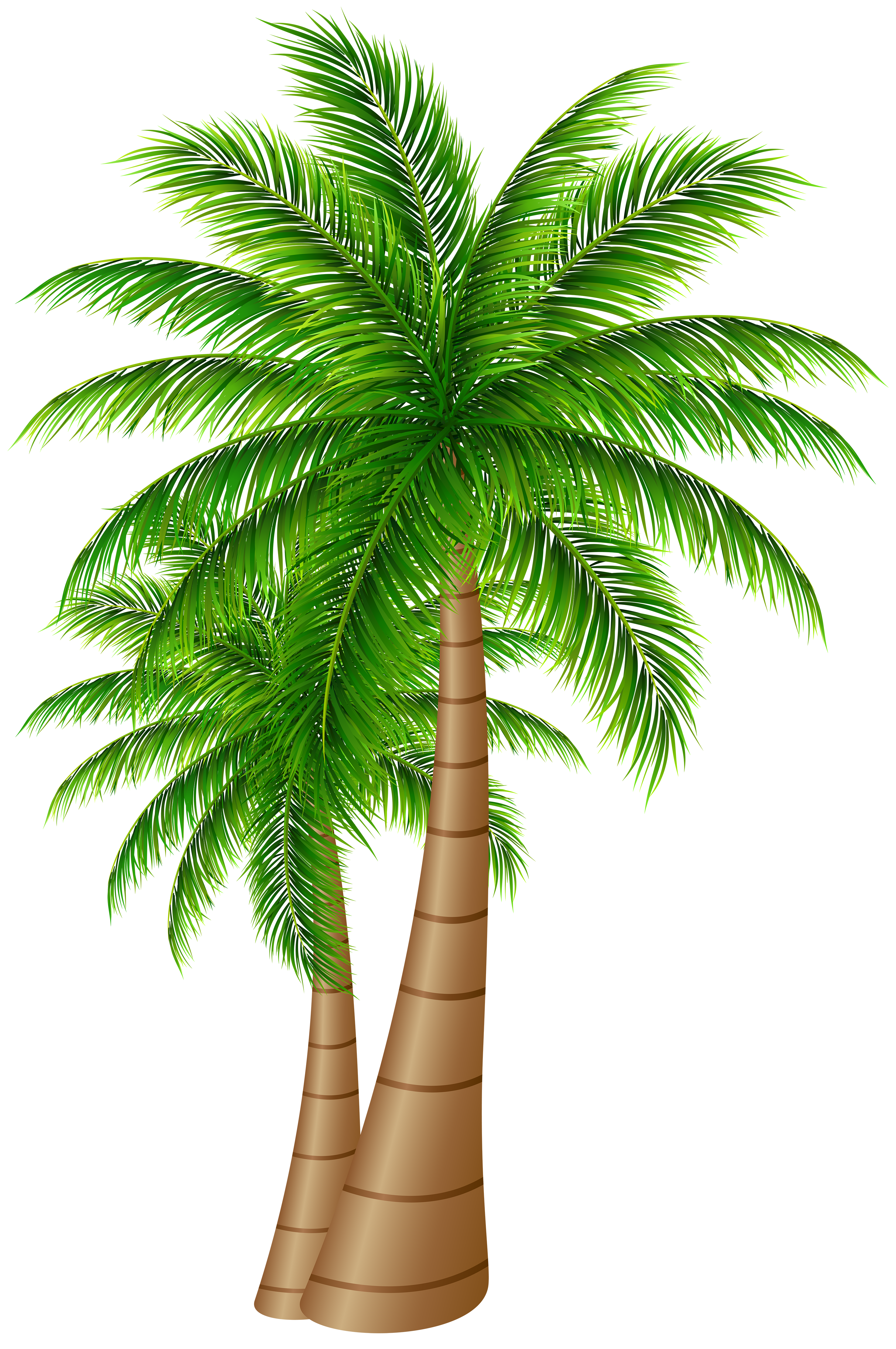 Date palm tree clipart image black and white stock Palm Trees Large PNG Clip Art Image | Gallery Yopriceville - High ... image black and white stock