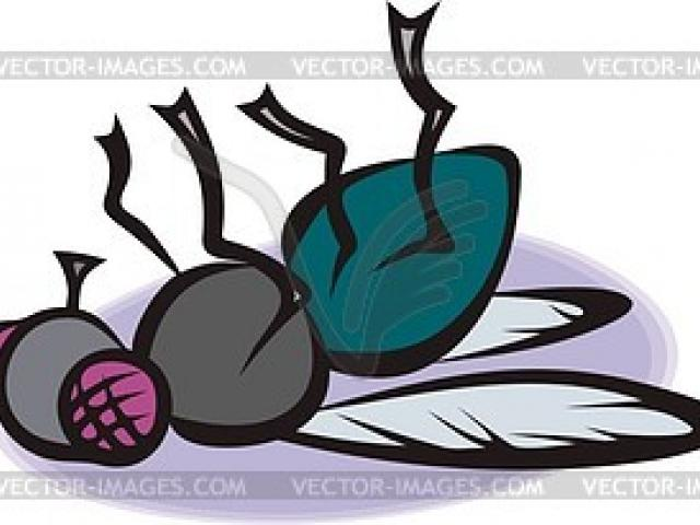 Dead fly clipart stock Free Fly Clipart, Download Free Clip Art on Owips.com stock