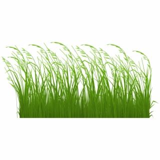 Dead grass clipart transparent clip library library Grass - Transparent Black Grass Png - dead grass png, Free PNG ... clip library library