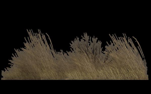 Dead grass clipart transparent jpg free Dead Grass Png Images Transparent Png Vector, Clipart, PSD ... jpg free