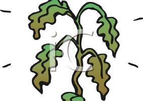 Dead plants clipart jpg Dead plant clipart 1 » Clipart Portal jpg