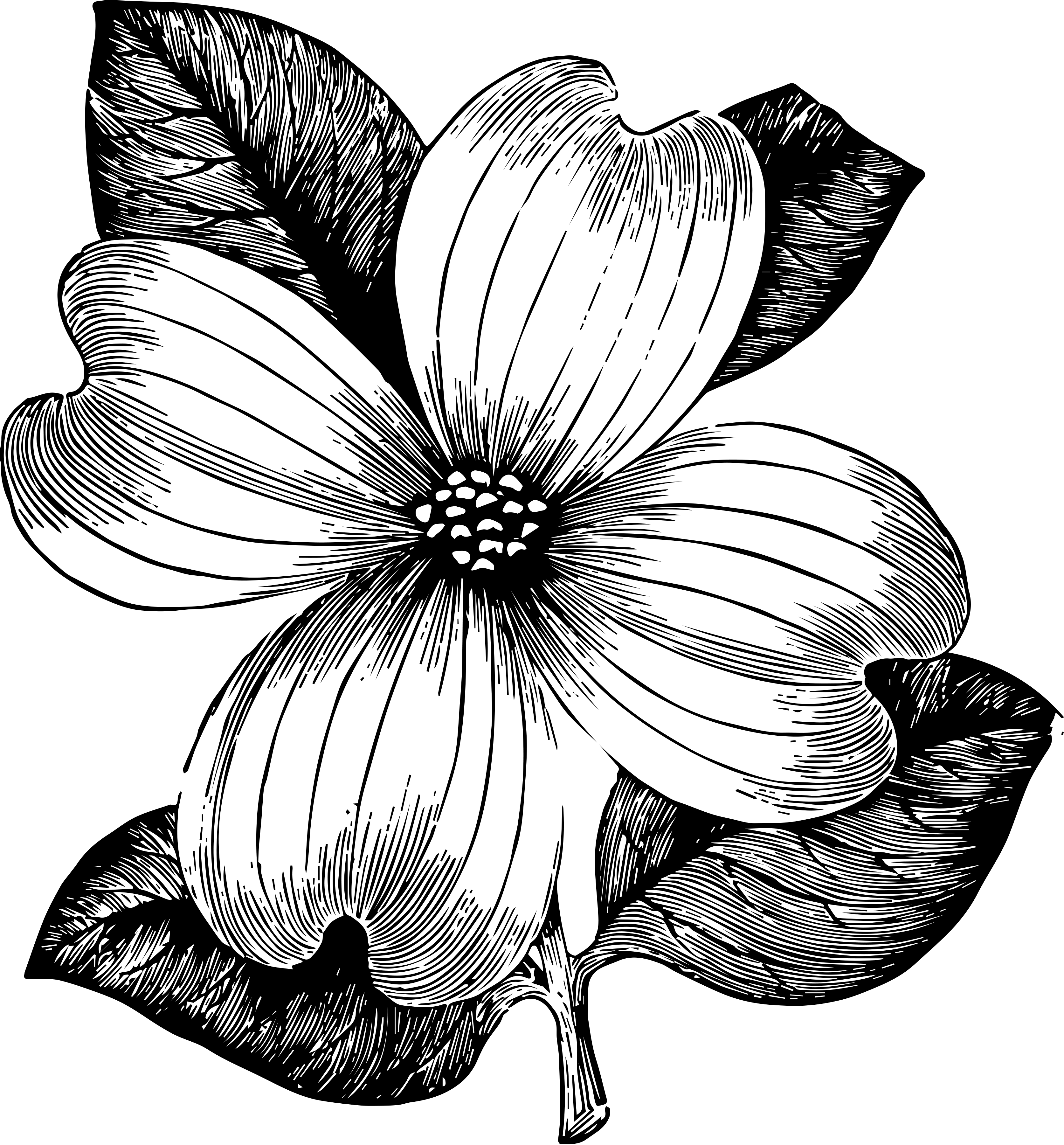 Dogwood flower clipart image transparent download freebie: commercial use flower clipart – HG Designs image transparent download