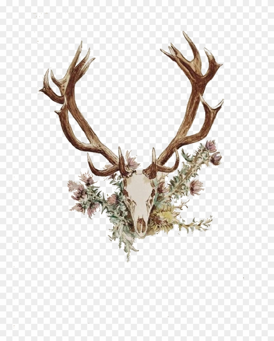 Deer antler with flowers clipart png royalty free library Antlers And Flowers Png Free - Deer Antler And Flower Tattoo Clipart ... png royalty free library