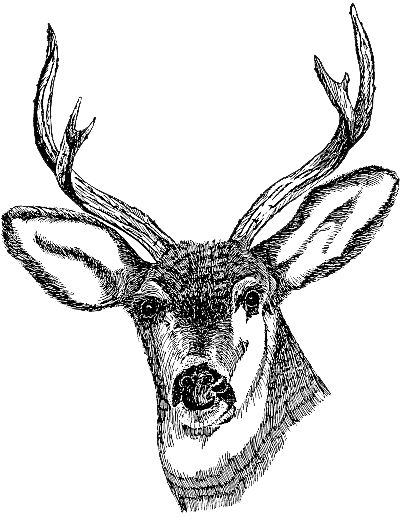 Deer clipart transparent background clip library stock Deer PNG Images Transparent Free Download | PNGMart.com clip library stock