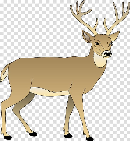 Deer clipart transparent background vector library library White-tailed deer , Bay Animated transparent background PNG ... vector library library