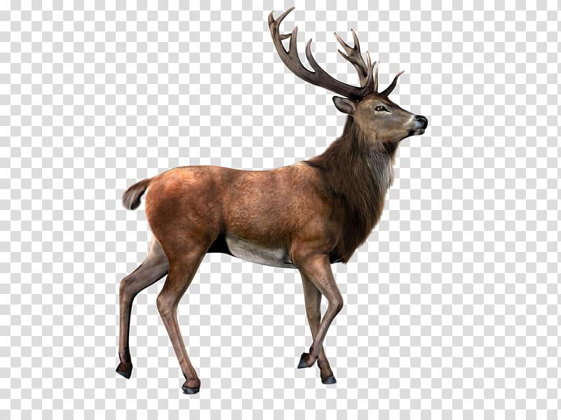 Deer clipart transparent background clip art transparent library Elk, brown deer transparent background PNG clipart | PNGGuru clip art transparent library