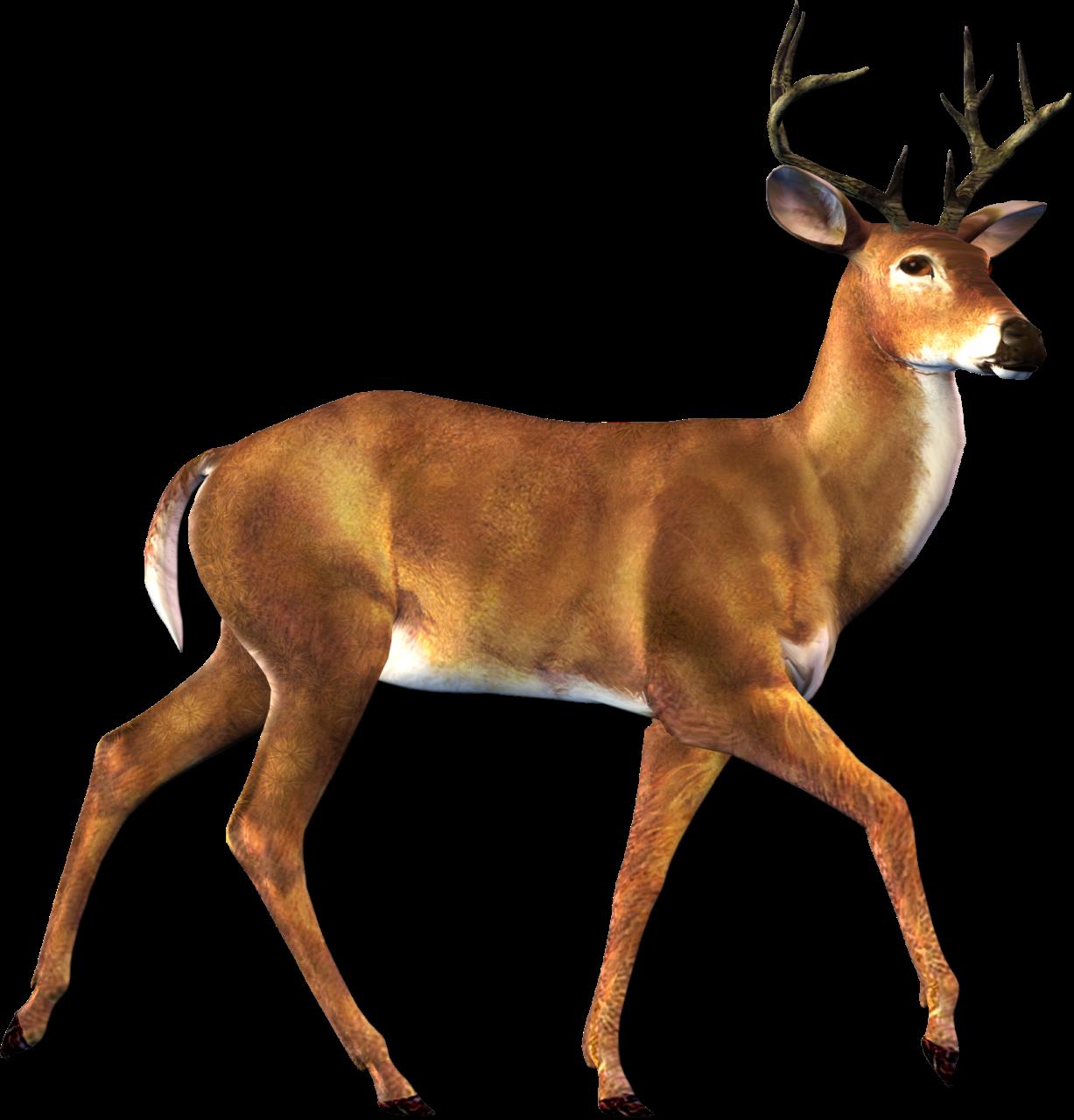 Deer clipart transparent background vector free stock Free Deer Transparent Background, Download Free Clip Art ... vector free stock