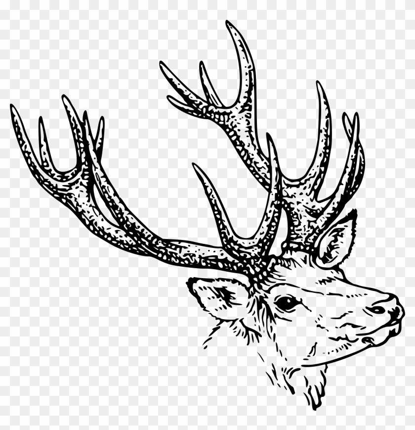 Deer head clipart black and white jpg stock Library Deer Head Clipart Black And White - Animal Horn Clipart, HD ... jpg stock