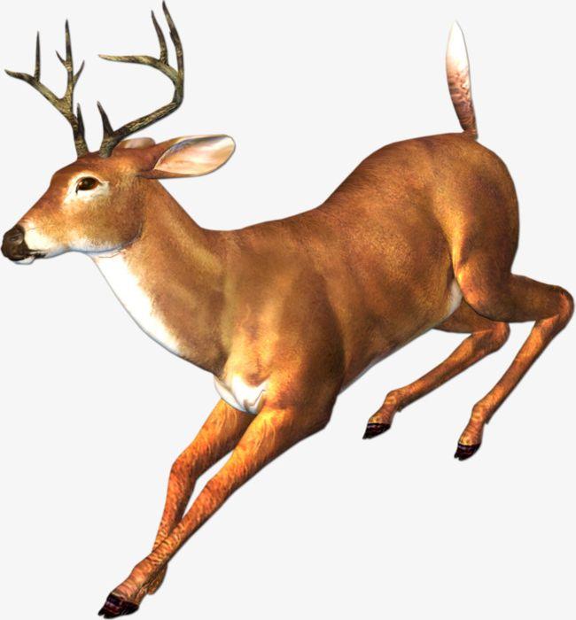Deer running clipart transparent download Running Deer PNG, Clipart, Animal, Antlers, Deer Clipart, Fawn, Run ... transparent download