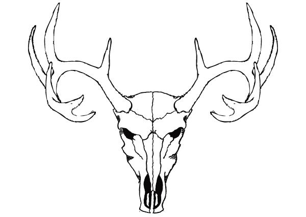 Deer skull clipart black and white vector vector transparent stock 85+ Deer Skull Clip Art   ClipartLook vector transparent stock