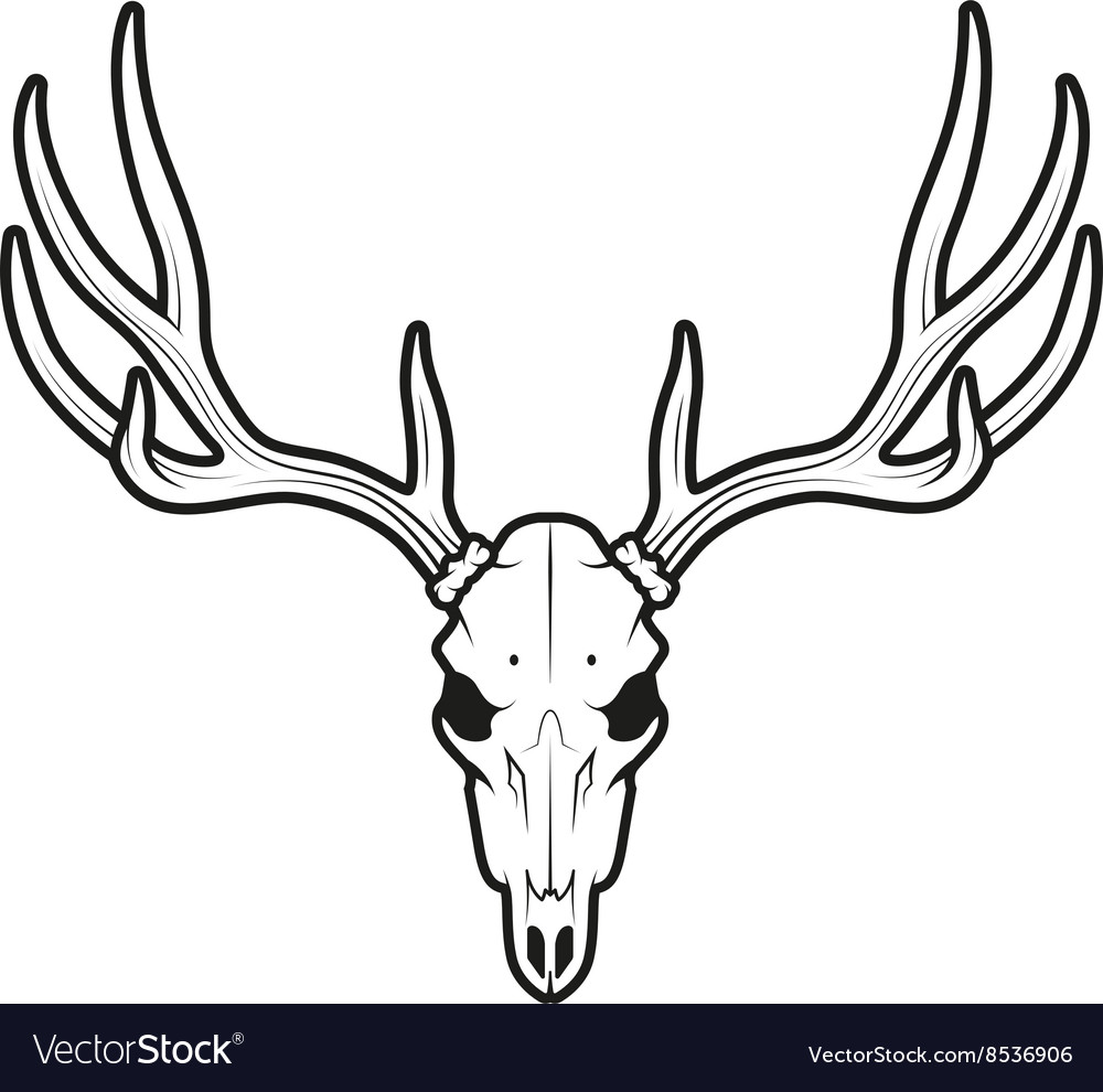 Deer skull clipart black and white vector png black and white download White tail deer skull vector image png black and white download