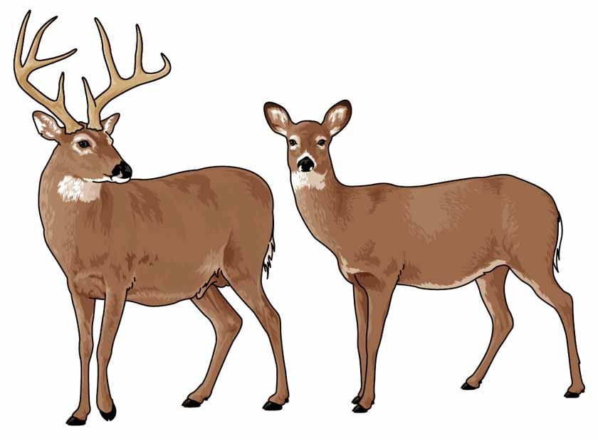 Deer tail clipart freeuse download White tail deer clipart 3 » Clipart Station freeuse download