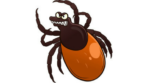 Deer tick clipart png free download Tick Identification: What Does A Tick Look Like? - Goodbye Skeeter png free download