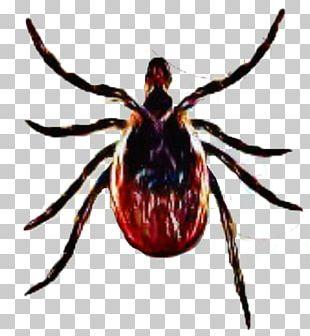 Deer tick clipart clip free stock Deer Tick PNG Images, Deer Tick Clipart Free Download clip free stock