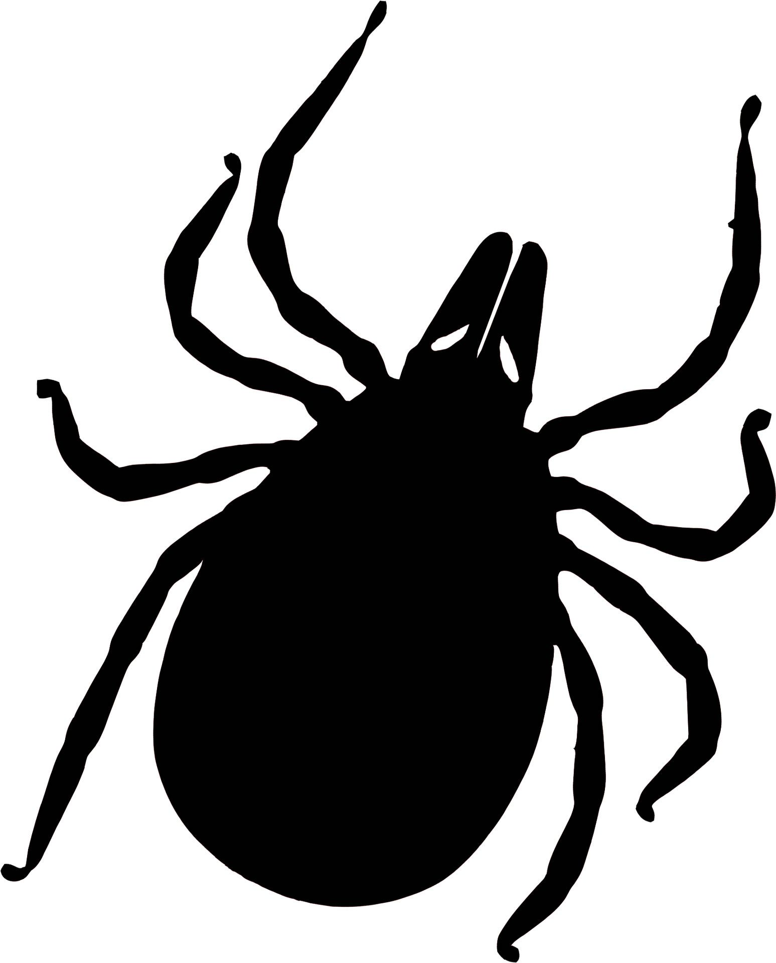 Deer tick clipart vector library library Here\'s what we know about the Bourbon Virus in the United States ... vector library library