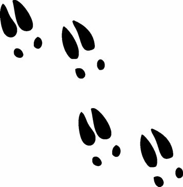 Deer tracks clipart clip transparent library Deer tracks painted multi-color? | Inked | Deer tracks, Deer track ... clip transparent library