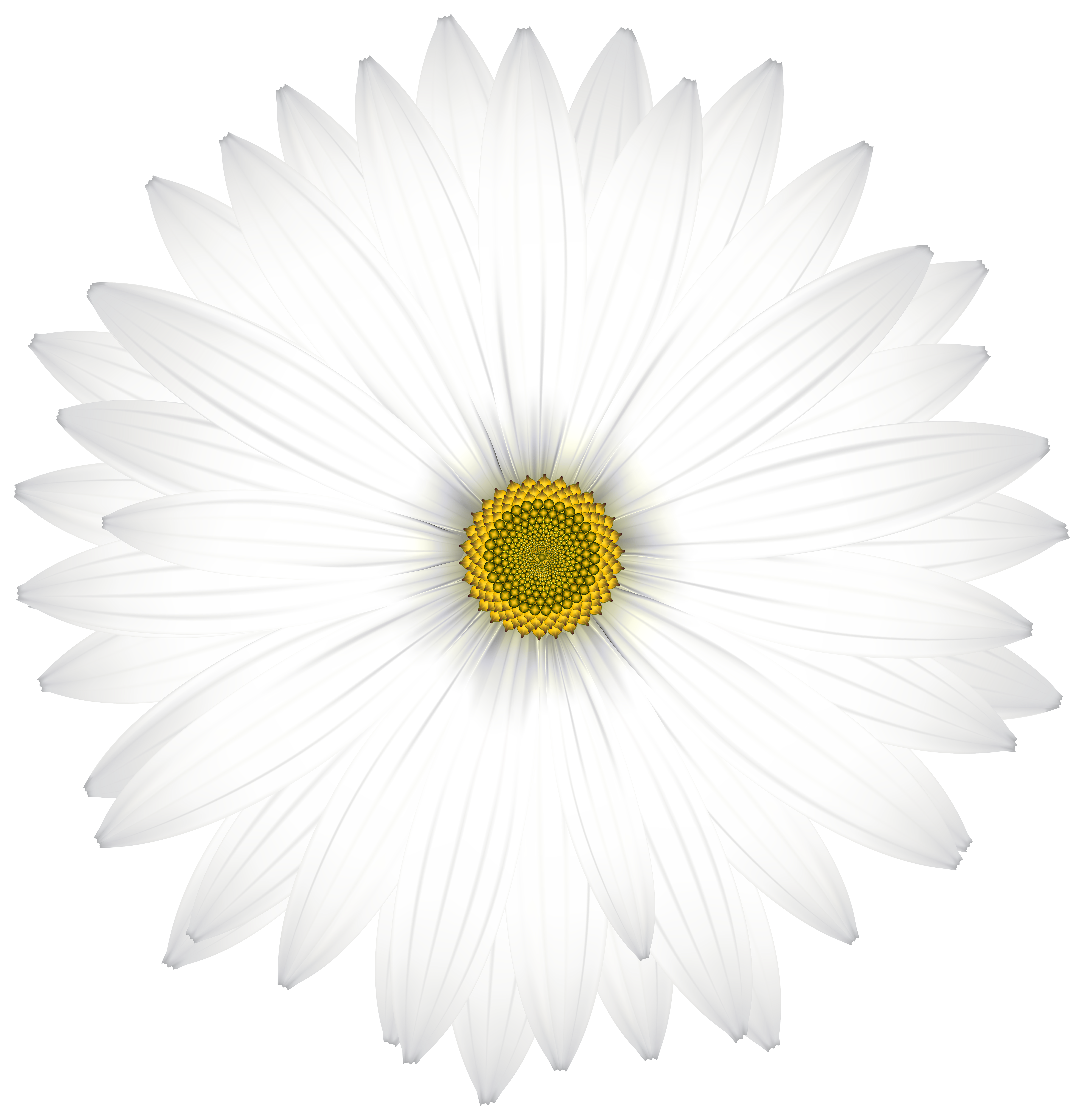 Delicate flower clipart vector black and white library Delicate White Daisy Transparent PNG Clip Art Image   Gallery ... vector black and white library