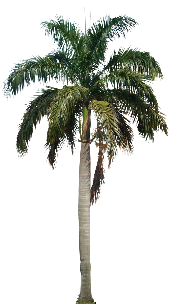 Palm tree sun clipart picture free download Clipart Palm Tree PNG File - 10742 - TransparentPNG picture free download