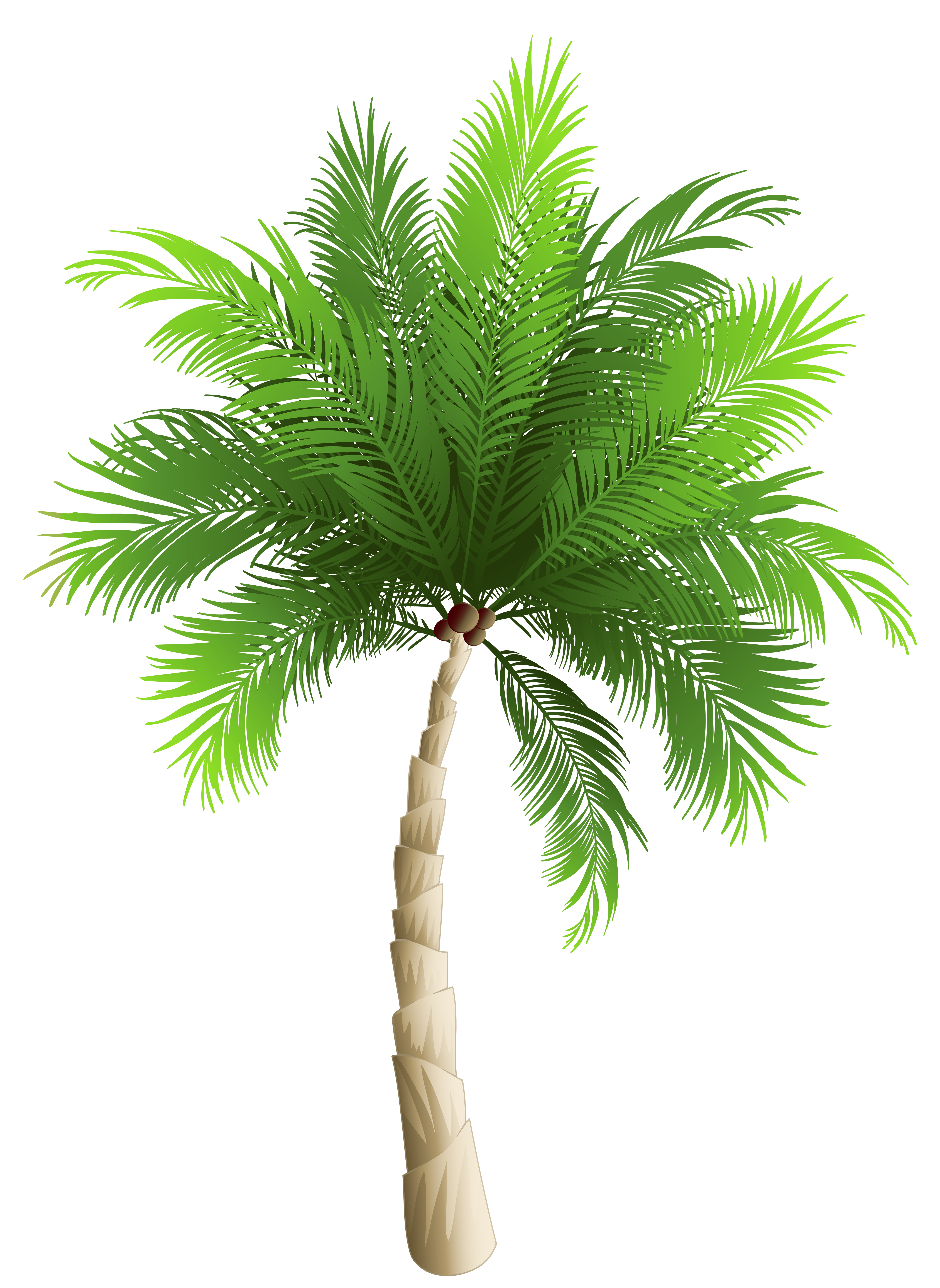 Palm tree clipart png vector royalty free library Palm Tree PNG Clipart Image | Gallery Yopriceville - High-Quality ... vector royalty free library