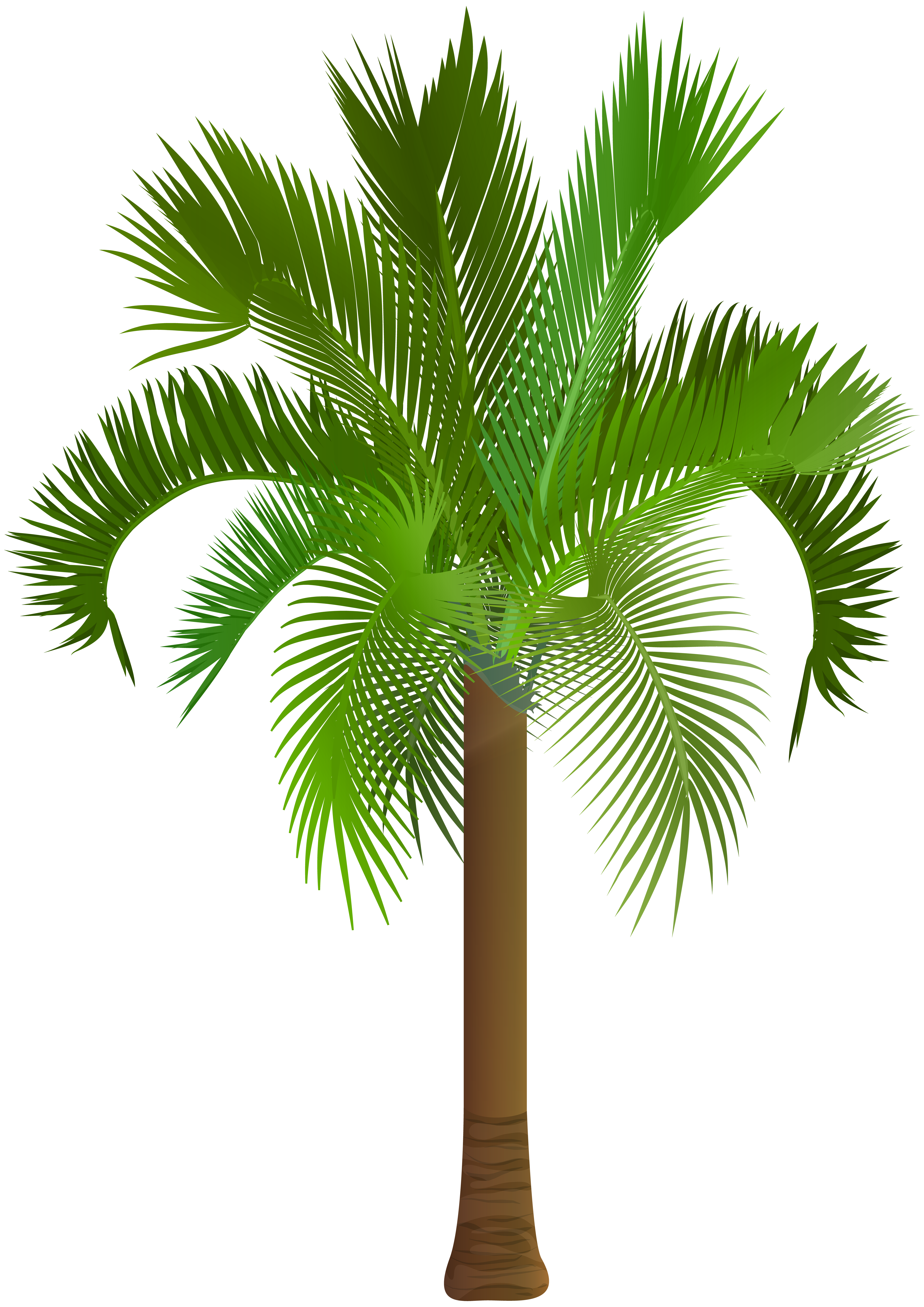 Palmetto tree clipart graphic Palm Tree Clip Art PNG Image | Gallery Yopriceville - High-Quality ... graphic