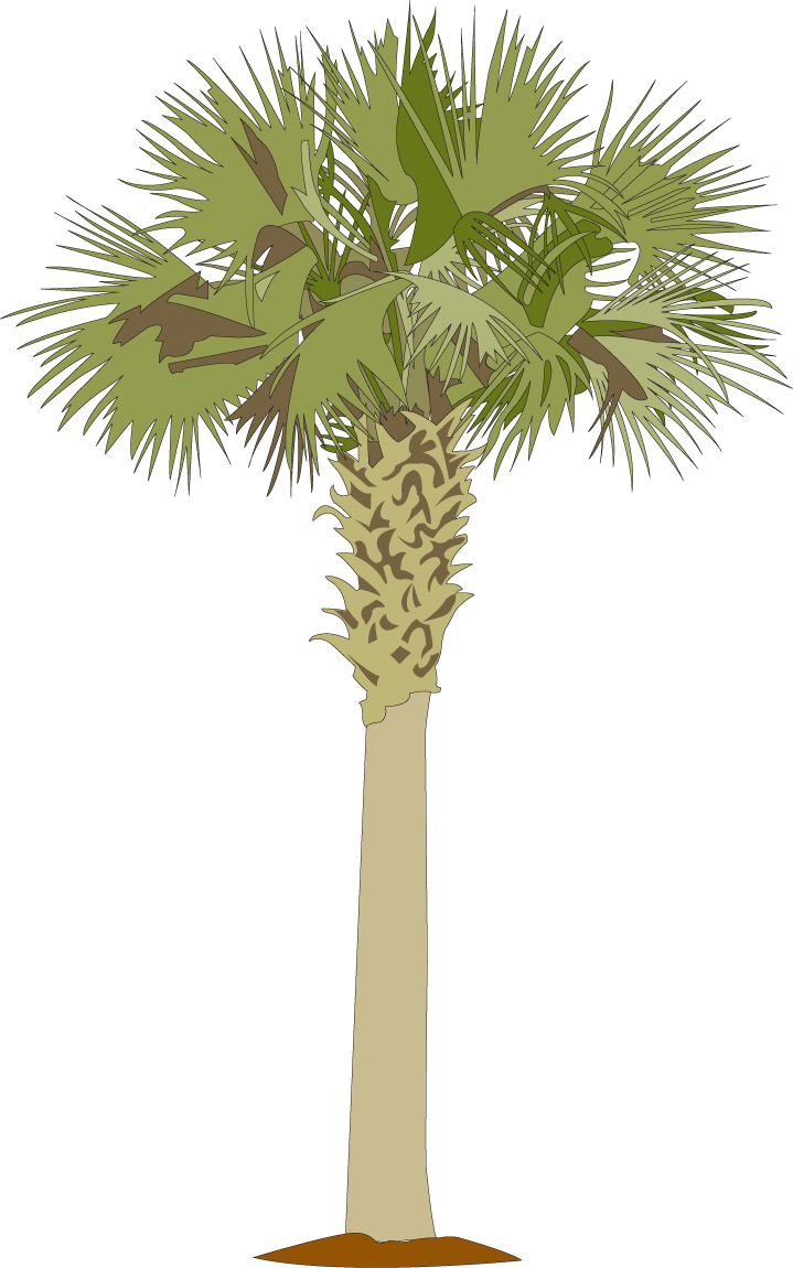Palmetto tree and moon clipart vector download Palmetto-tree.png 719×1,150 pixels | Low Country Boil Dinner Party ... vector download