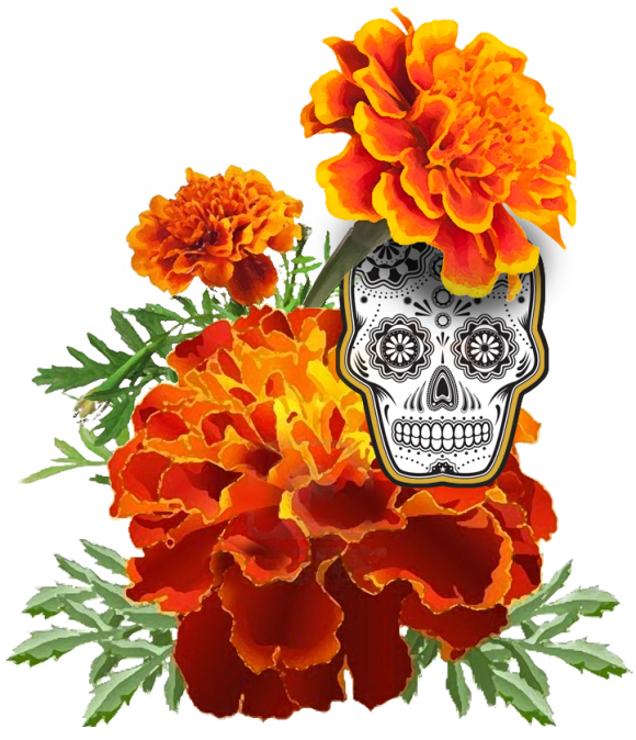 Dia de los muertos marigold skull clipart banner transparent stock Catch Us Crafting At : Dia De Los Muertos | The Coachella Valley ... banner transparent stock