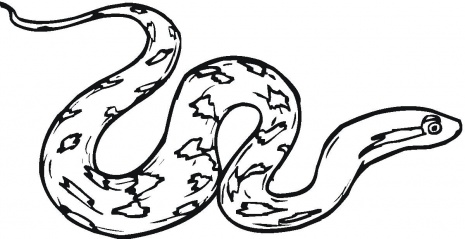 Diamondback clipart picture royalty free library Diamondback snake clipart » Clipart Station picture royalty free library